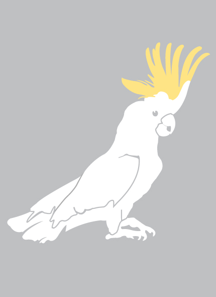 Oscar cockatoo graphic, designed by Neon Zoo for Jude Australia